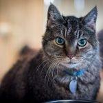 ¿Por qué los gatos se vuelven locos tras defecar?