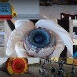 11 objetos extraños que fueron arrastrados a la costa