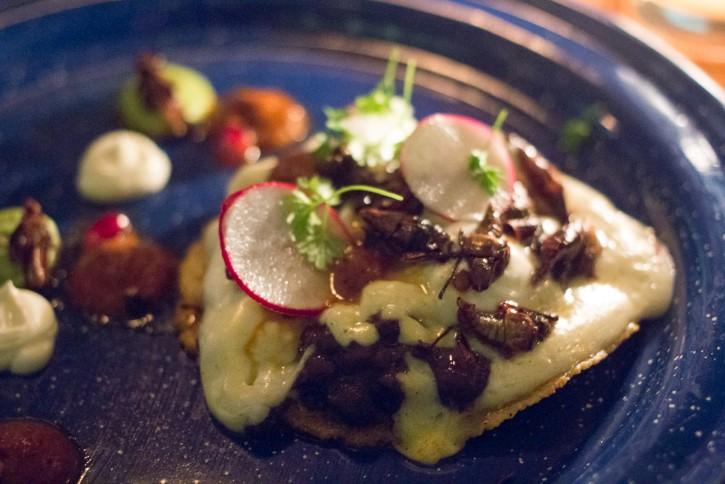 tlayuda con chapulines en restaurant black ant nueva york