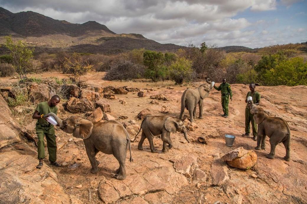 elefantes huerfanos en kenia