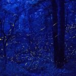 luciernagas en bosque de mexico