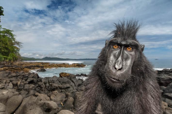 selfie mono en la playa
