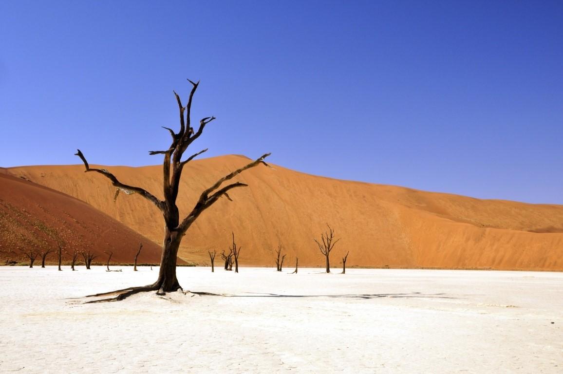Deadvlei arbol en el medio del desierto