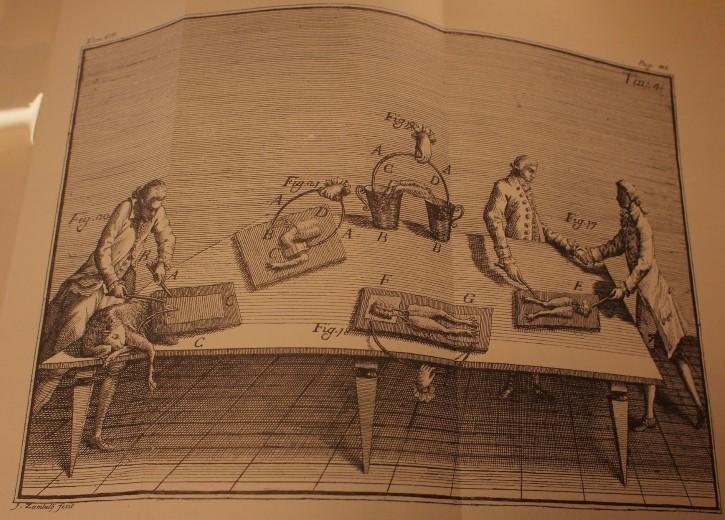 Luigi Galvani y el experimento con las ranas