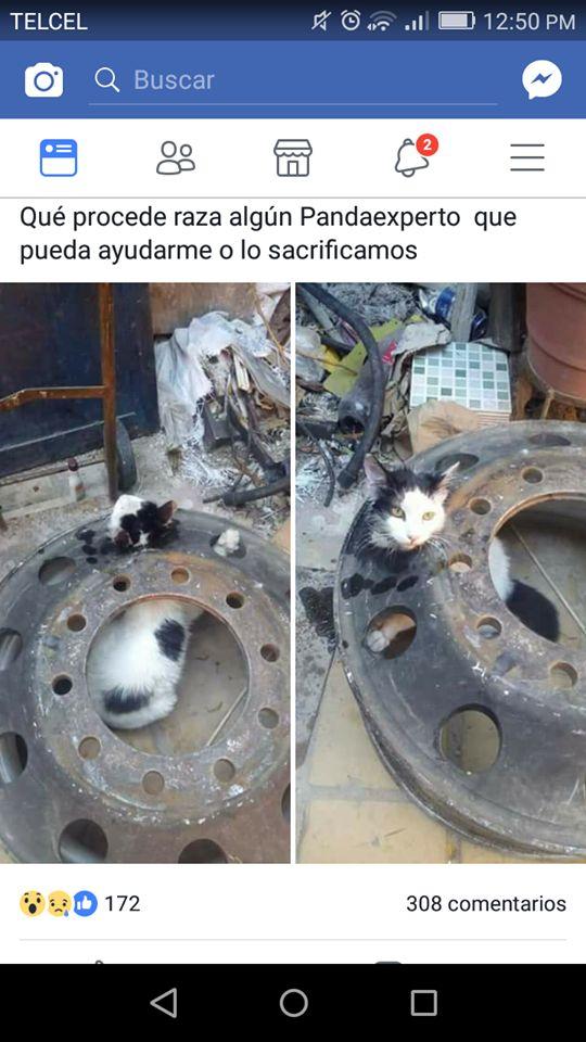 Marcianadas 315 1201Ene001208 (60)