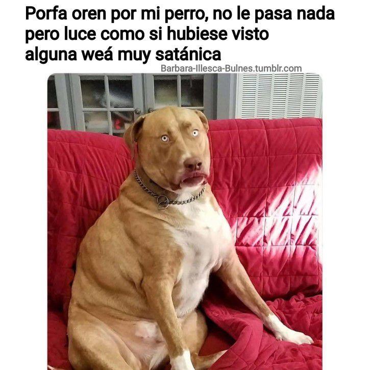 Marcianadas 317 26enero201801208 (9)