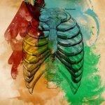 7 órganos sin los que puedes vivir