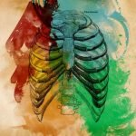 anatomia portada