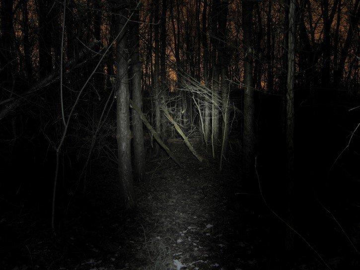 Bosque Aterrador En La Oscuridad