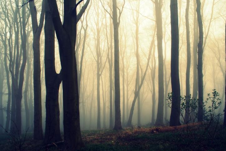 Bosque Del Terror Con Niebla