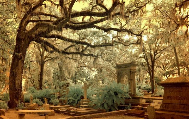 cementerio tenebroso arbol blanco