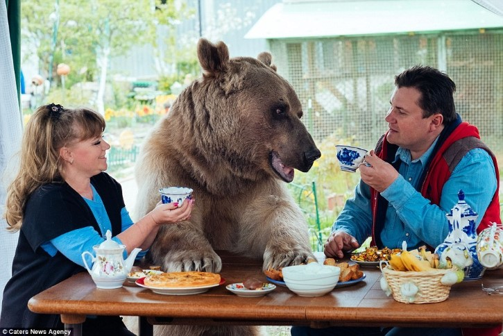 el oso de Panteleenko