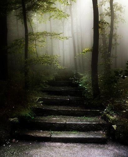 Escaleras En El Bosque