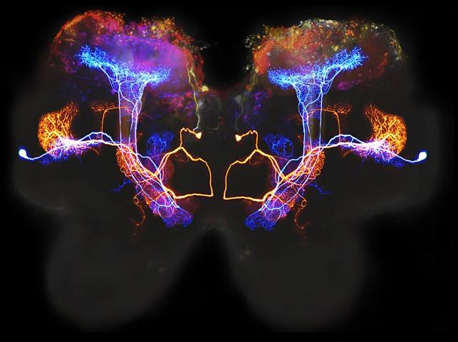 lobulos temporales neuronas