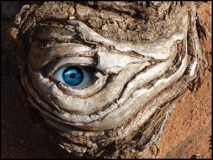 ojo entre la madera aterrador