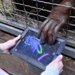 7 animales increíbles que usan herramientas