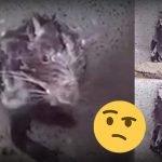 Rata Se Baña Como Humano