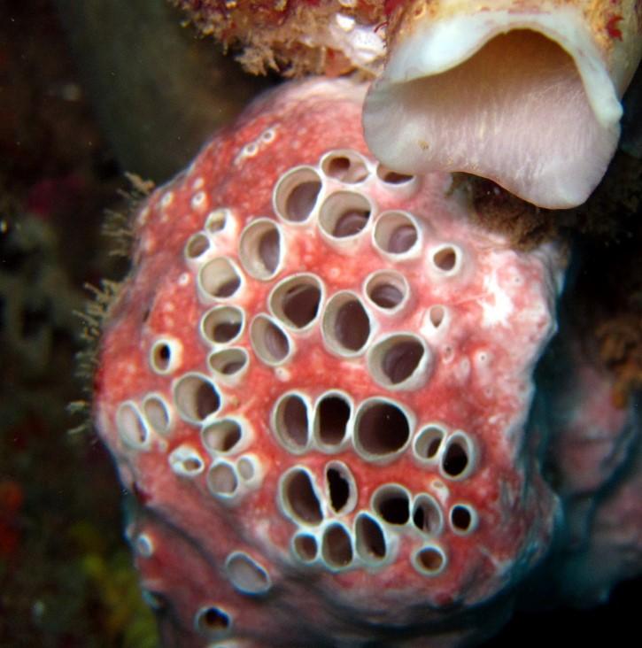 tripofobia animal marino