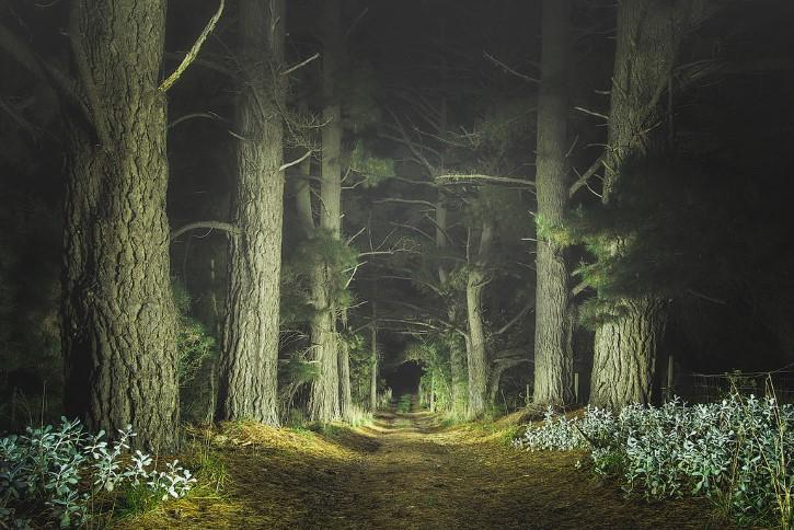 Bosque camino hadas