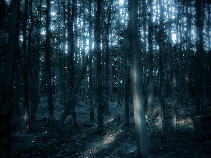 Bosque tenebroso al anochecer
