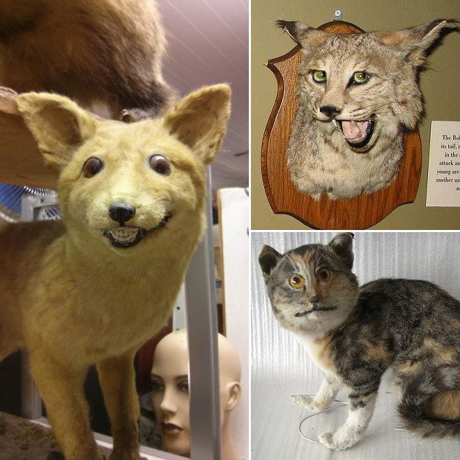 Desastres taxidermia (12)