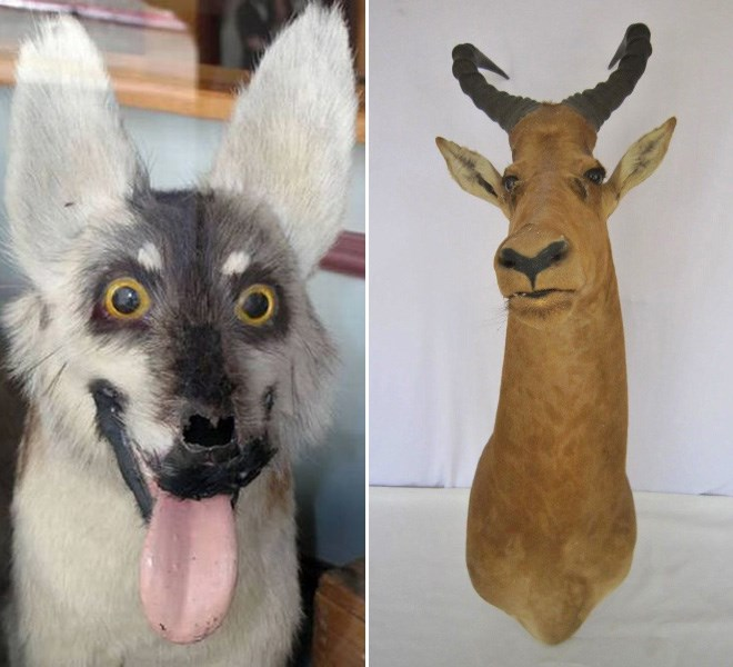 Desastres taxidermia (14)