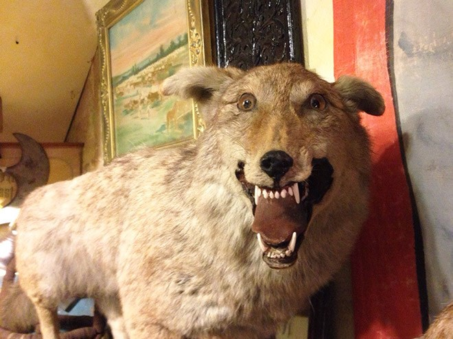 Desastres taxidermia (5)