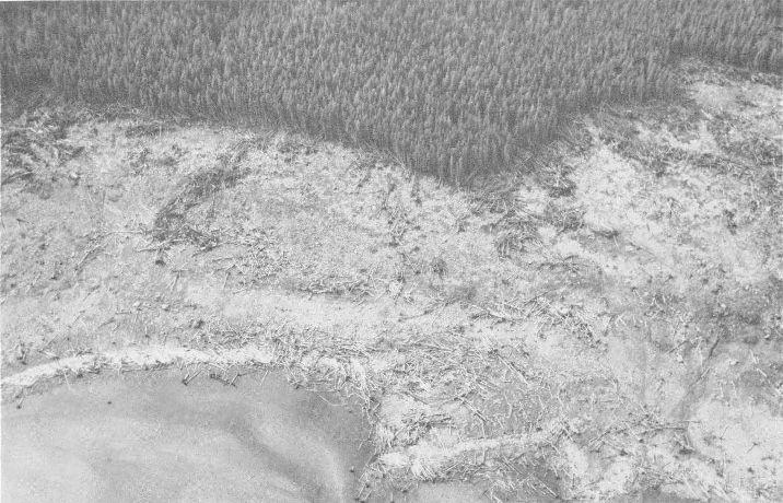 Devastacion del bosque en bahia lituya 1958