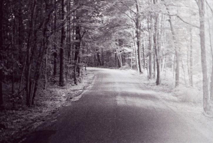 Fotografia en el bosque carretera