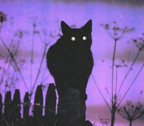 Gato Negro Tenebroso