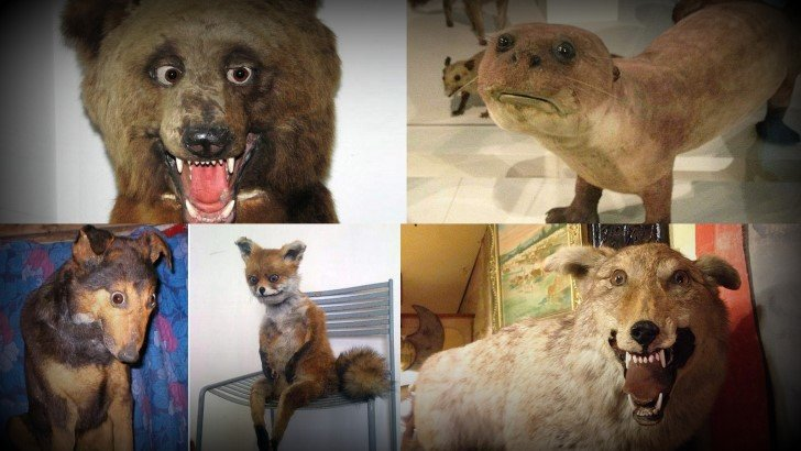 Horrores taxidermia
