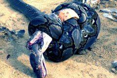 Pelea Serpientes Portada