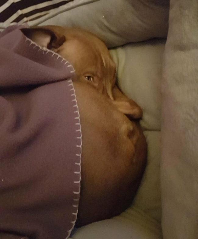 perro cara gorda