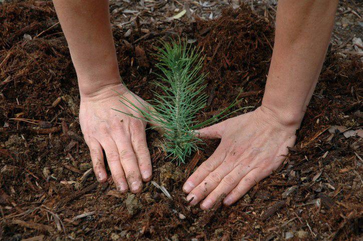Plantando un nuevo arbol