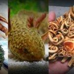 14 seres vivos que parecen de otro mundo