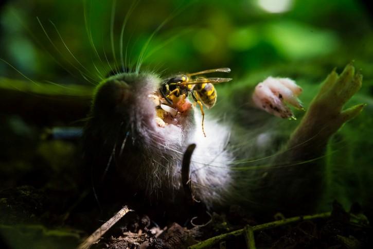 Rata muerte en el bosque