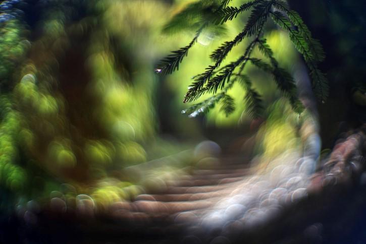 Sueño distorcionado bosque