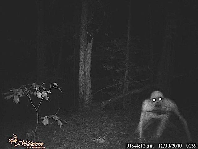 The rake en el bosque
