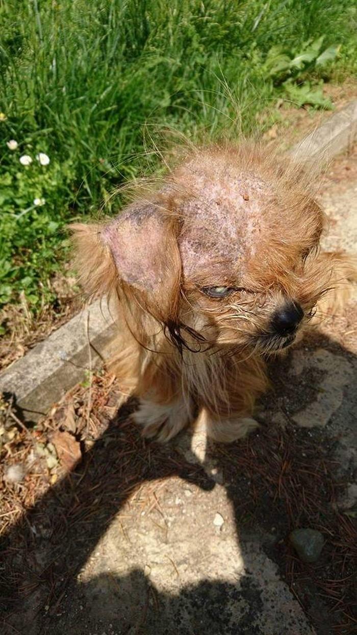 Transformacion del perro frodo (1)