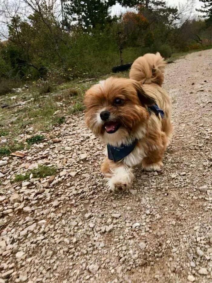 Transformacion del perro frodo (12)