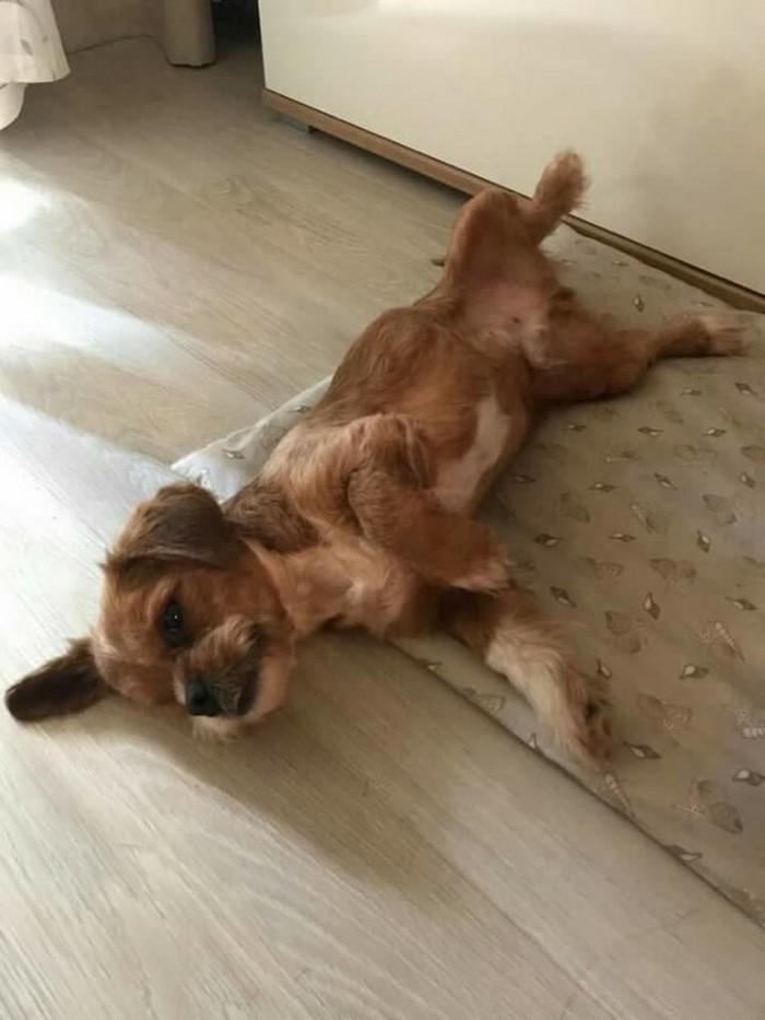 Transformacion del perro frodo (7)