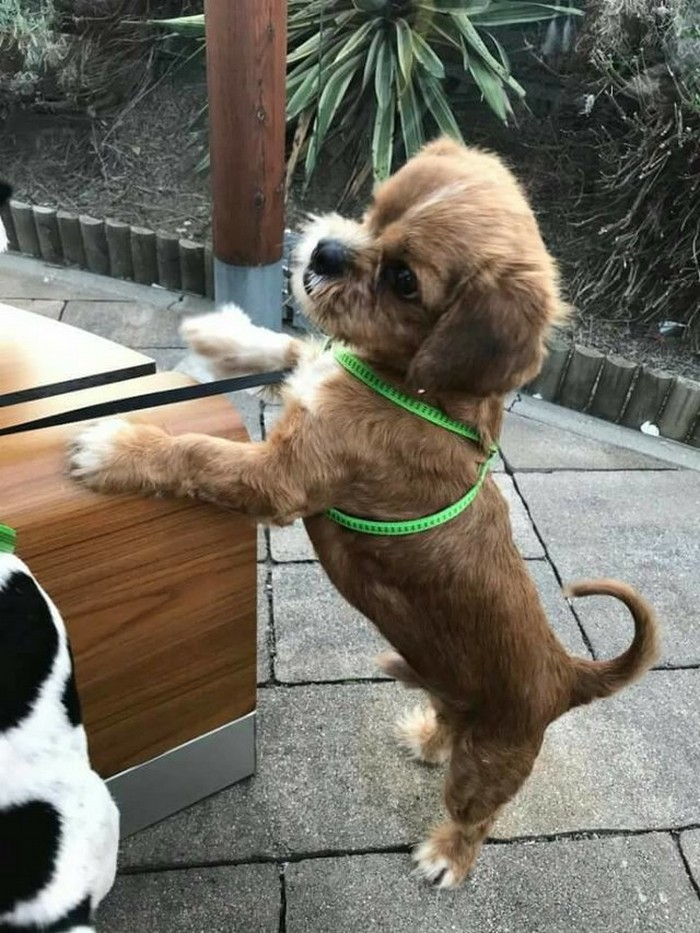 Transformacion del perro frodo (8)