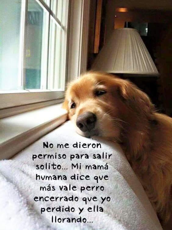 Marcianadas 322 020318001501 (148)