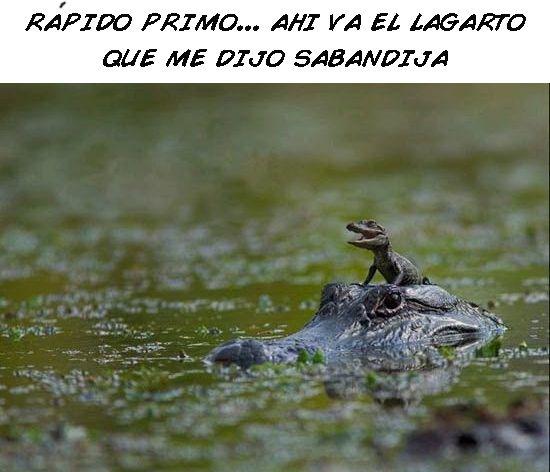 Marcianadas 323 090318001353 (242)