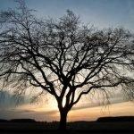 Elaboran árbol genealógico con 13 millones de familiares