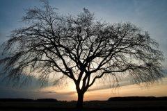 Arbol con muchas ramas