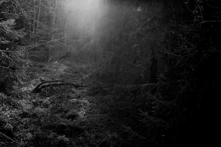 Bosque denso oscuridad