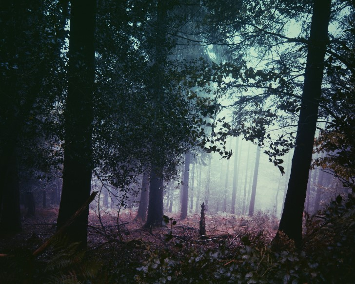 Bosque tenebroso con niebla