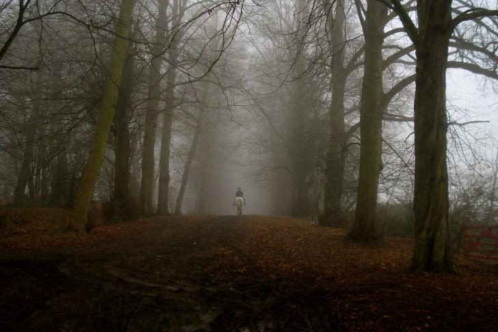 Cabalgando por el bosque