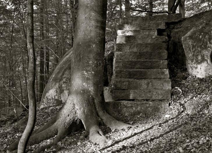 Extrañas escaleras en el bosque